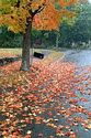 Image Ref: 19-04-66 - Autumn color in New England, Viewed 8749 times