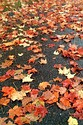 Autumn color in New England has been viewed 8110 times