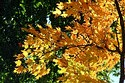Image Ref: 19-04-6 - Autumn color in New England, Viewed 5896 times