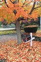 Image Ref: 19-04-71 - Autumn color in New England, Viewed 6481 times
