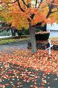 Image Ref: 19-04-72 - Autumn color in New England, Viewed 5907 times