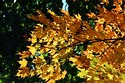 Image Ref: 19-04-7 - Autumn color in New England, Viewed 5754 times