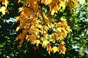Image Ref: 19-04-8 - Autumn color in New England, Viewed 5792 times