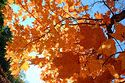 Autumn color in New England has been viewed 7565 times