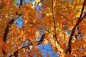 Autumn color in New England has been viewed 7151 times