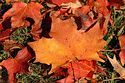 Image Ref: 19-05-17 - Autumn color in New England, Viewed 5882 times