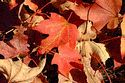 Image Ref: 19-05-18 - Autumn color in New England, Viewed 6152 times