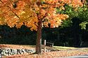 Autumn color in New England has been viewed 12538 times