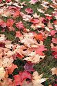 Image Ref: 19-05-53 - Autumn color in New England, Viewed 5513 times
