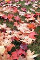 Image Ref: 19-05-54 - Autumn color in New England, Viewed 5464 times