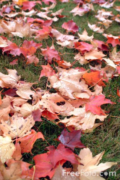 Picture of Autumn color in New England - Free Pictures - FreeFoto.com