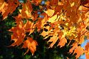 Autumn color in New England has been viewed 6823 times