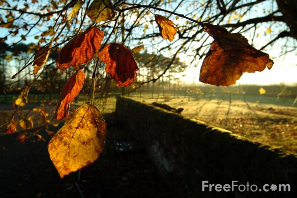 Picture of Autumn Colour - Fall Color - Free Pictures - FreeFoto.com