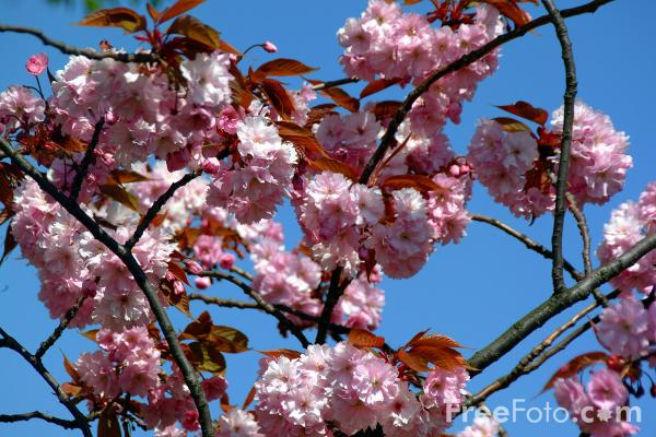 Picture of Spring - Free Pictures - FreeFoto.com