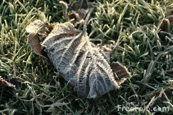 Picture of Winter Frost - Free Pictures - FreeFoto.com