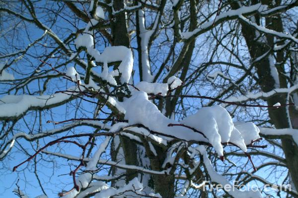 Picture of Winter Scene In Northumberland - Free Pictures - FreeFoto.com