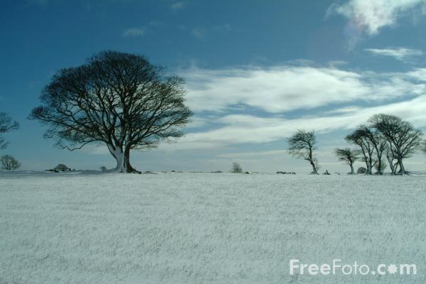 Picture of Tree in the snow, Winter, Northumberland - Free Pictures - FreeFoto.com