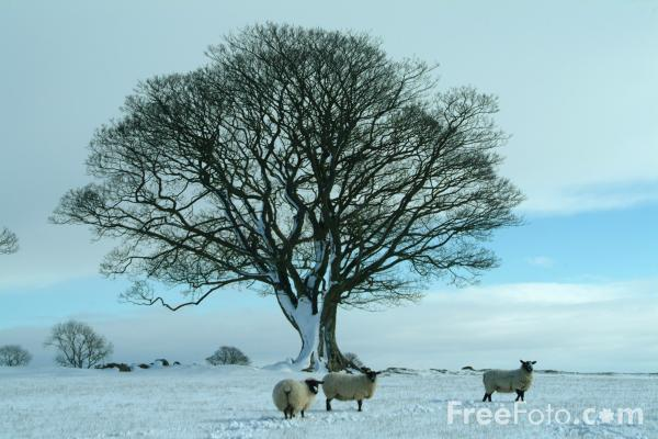 Picture of Winter In Northumberland - Free Pictures - FreeFoto.com