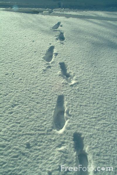 Picture of Footsteps in the snow - Free Pictures - FreeFoto.com