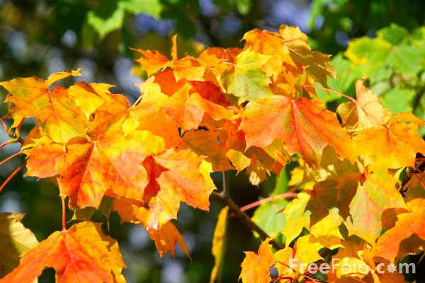 Picture of Autumn Colour / Fall Color - Free Pictures - FreeFoto.com
