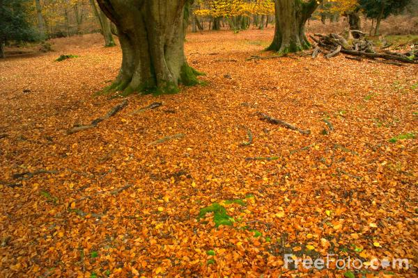 Picture of New Forest Autumn Colour - Free Pictures - FreeFoto.com