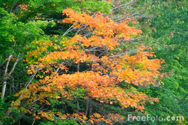 Picture of Autumn color in New Hampshire - Free Pictures - FreeFoto.com