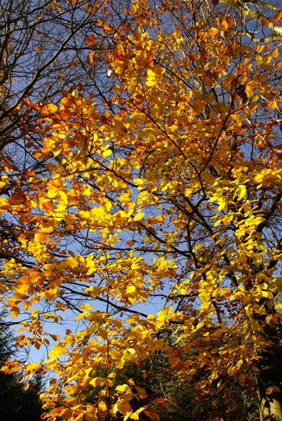 Picture of Autumn Colour - Free Pictures - FreeFoto.com
