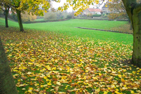 Picture of Autumn Colour, Melsonby, North Yorkshire - Free Pictures - FreeFoto.com