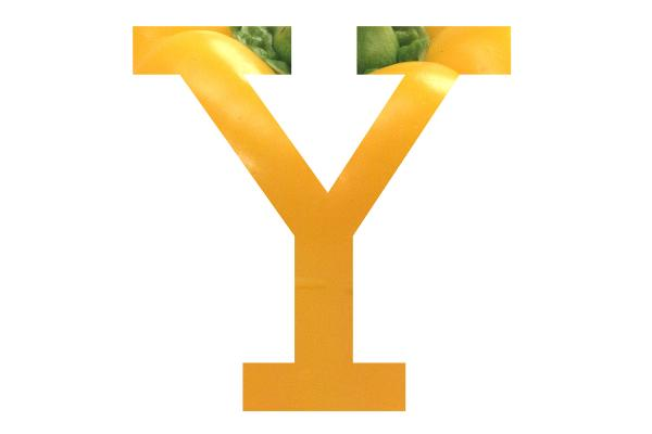 Picture of Letter Y - Free Pictures - FreeFoto.com