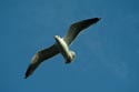 Image Ref: 2003-04-17 - Seagull, Viewed 7786 times