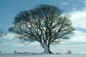 Image Ref: 2004-02-27 - Sycamore Tree, Viewed 3403 times