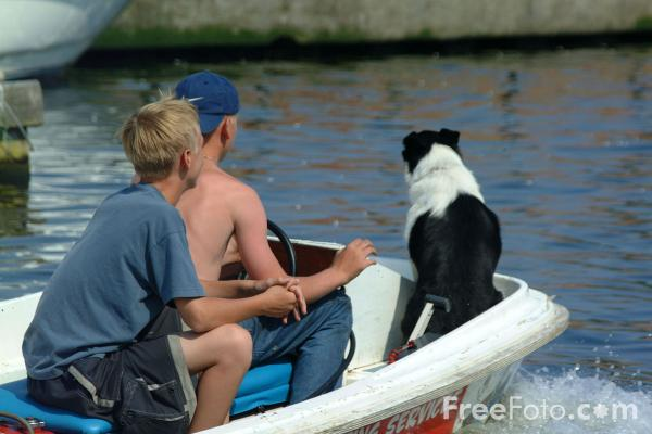 Picture of Dog in a boat - Free Pictures - FreeFoto.com