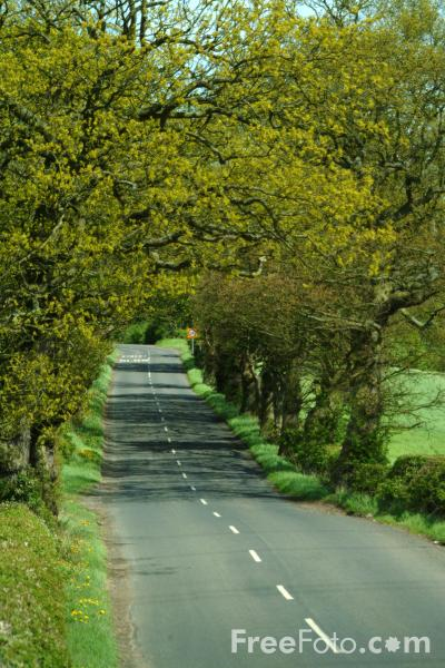 Picture of Country Road, Northumberland - Free Pictures - FreeFoto.com