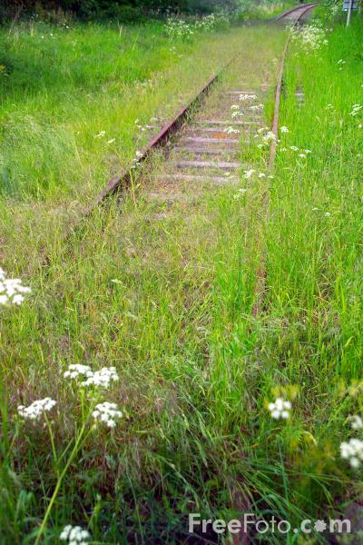 Picture of Overgrowen railway track - Free Pictures - FreeFoto.com
