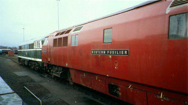 Picture of D1023 Western Fusilier - Free Pictures - FreeFoto.com