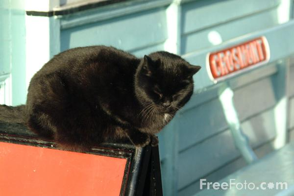 Picture of Railway Cat, Grosmont - Free Pictures - FreeFoto.com