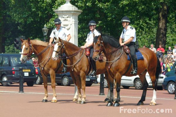 Picture of Police Horse - Free Pictures - FreeFoto.com
