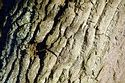 Tree Bark Texture has been viewed 14382 times