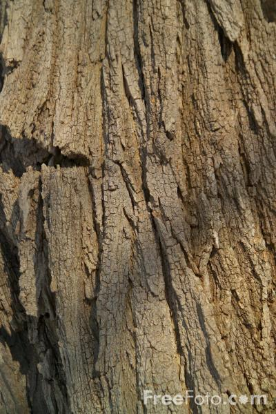 Picture of Tree Bark Texture - Free Pictures - FreeFoto.com