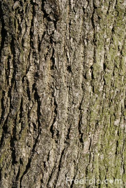 Image may be licensed under CreativeCommons Attribution-Noncommercial ...: www.freefoto.com/preview/33-02-68/Tree-Bark-Texture