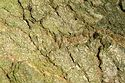 Image Ref: 33-02-6 - Tree Bark Texture, Viewed 6239 times