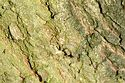 Image Ref: 33-02-7 - Tree Bark Texture, Viewed 6730 times