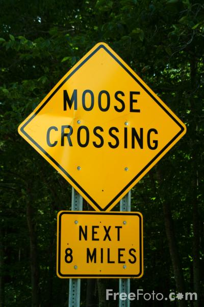 Picture of Moose Crossing - Free Pictures - FreeFoto.com