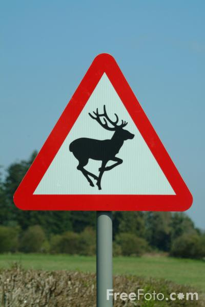 Picture of Caution Deer Sign - Free Pictures - FreeFoto.com