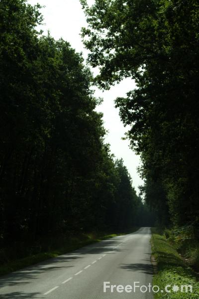 Picture of Country Road, France - Free Pictures - FreeFoto.com
