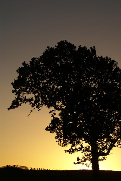 Picture of Tree at Sunset - Free Pictures - FreeFoto.com