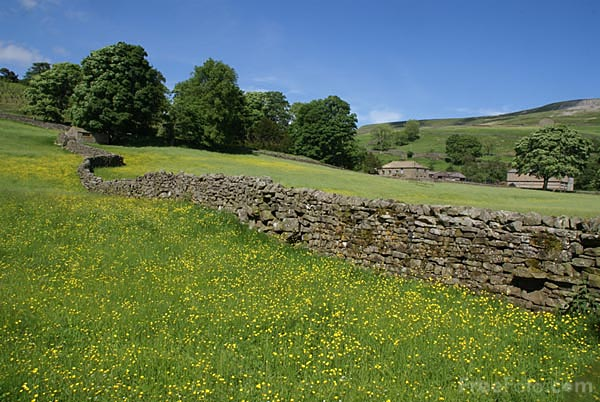 Picture of Summer Meadow Arkengarthdale - Free Pictures - FreeFoto.com