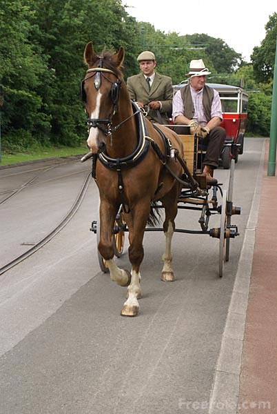 Picture of A carriage and a pair of horses - Free Pictures - FreeFoto.com