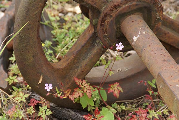 Picture of Rusty Wheel - Free Pictures - FreeFoto.com