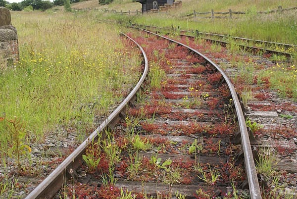 Picture of Rusty old railway track - Free Pictures - FreeFoto.com